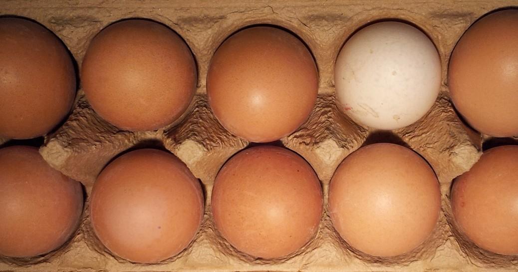 Eier-gekocht-gebraten-und-mehr